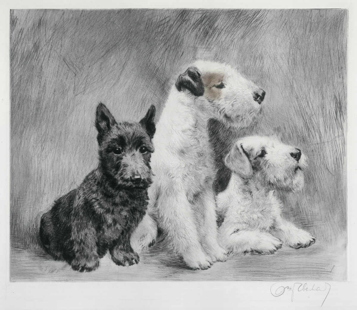 Three Wire Haired Terriers