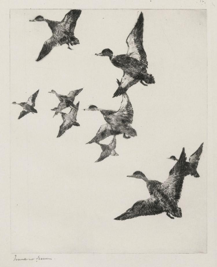 Black Ducks No. 2