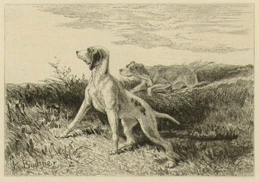 Hunting Hounds