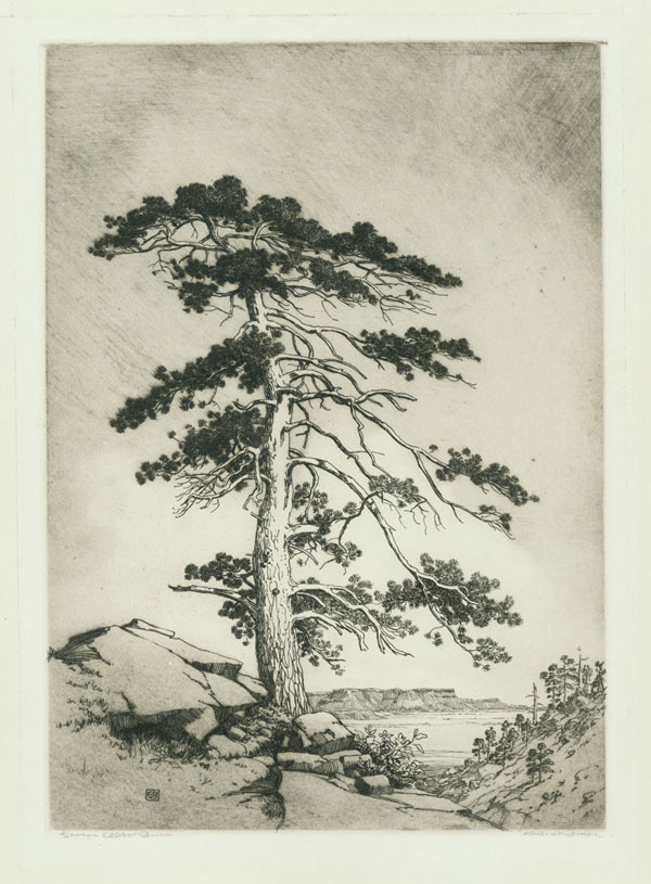 The Sentinel Pine