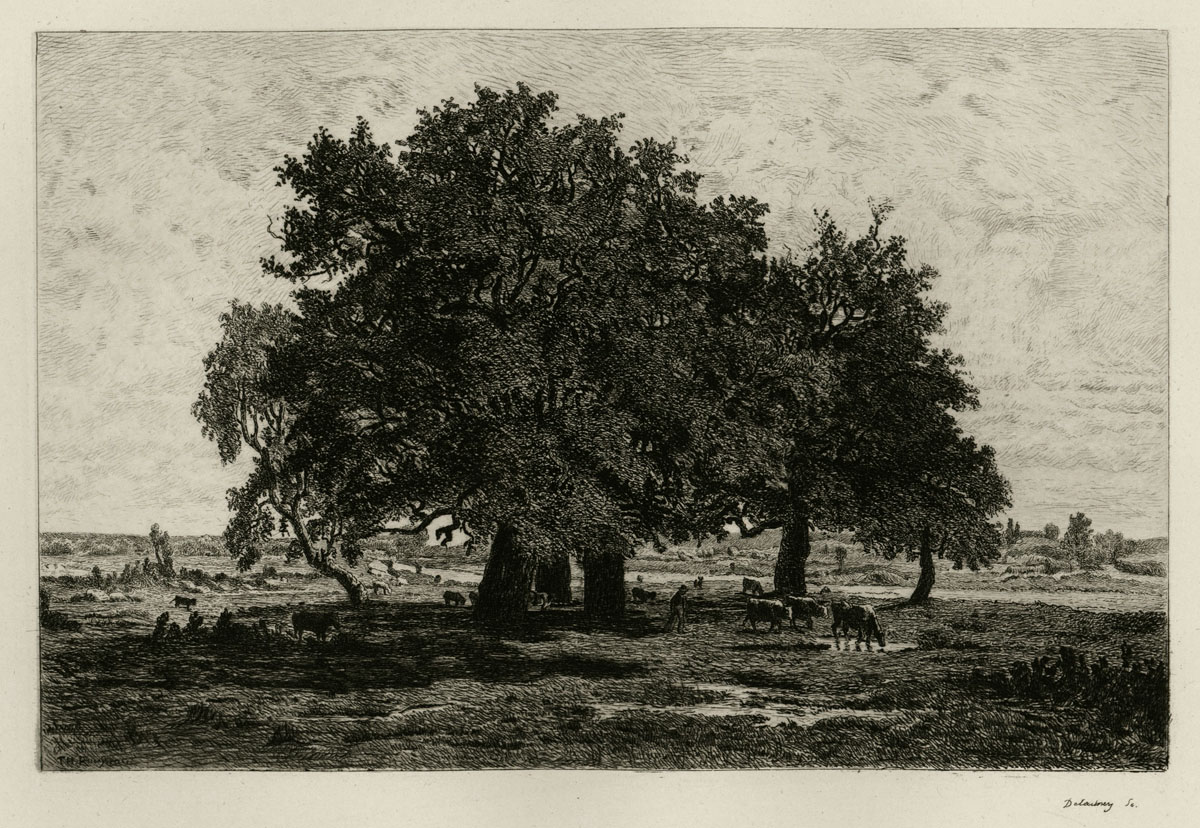 Group of Oaks, Forest of Fontainebleau