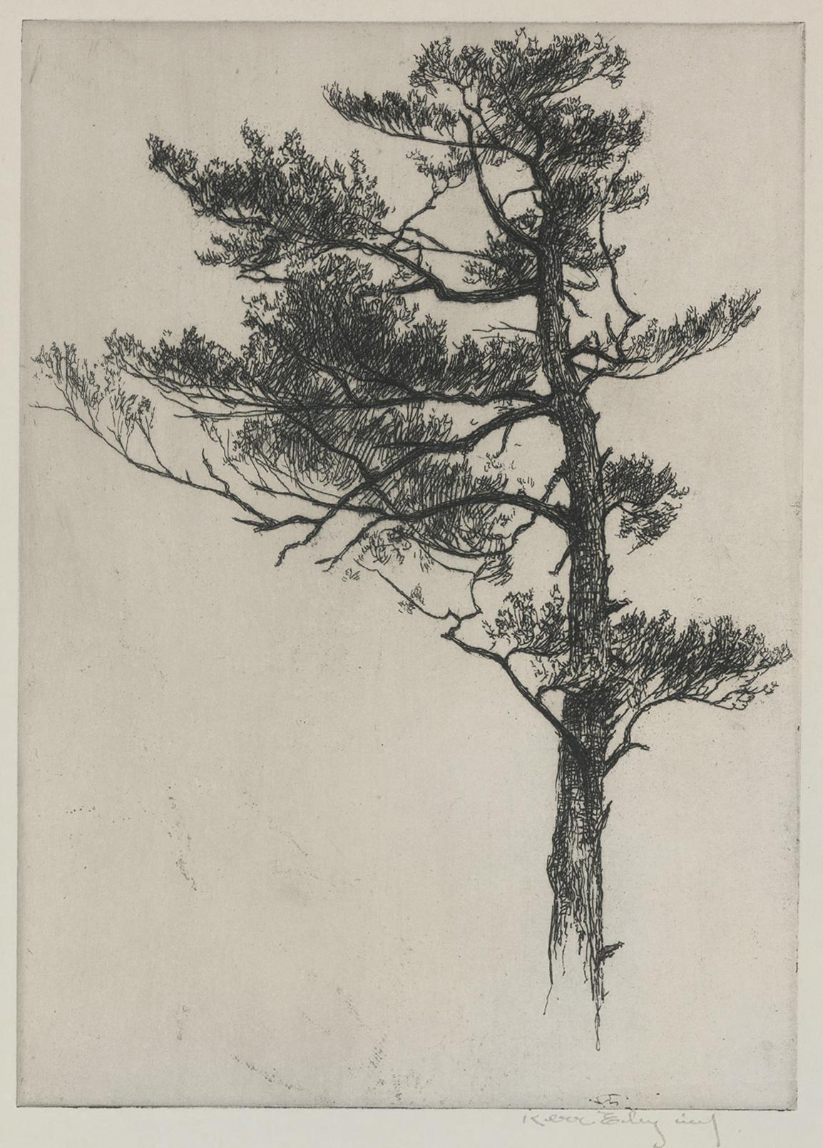 Pine Tops No. 1