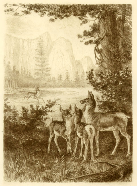 Western Mountains With Deer