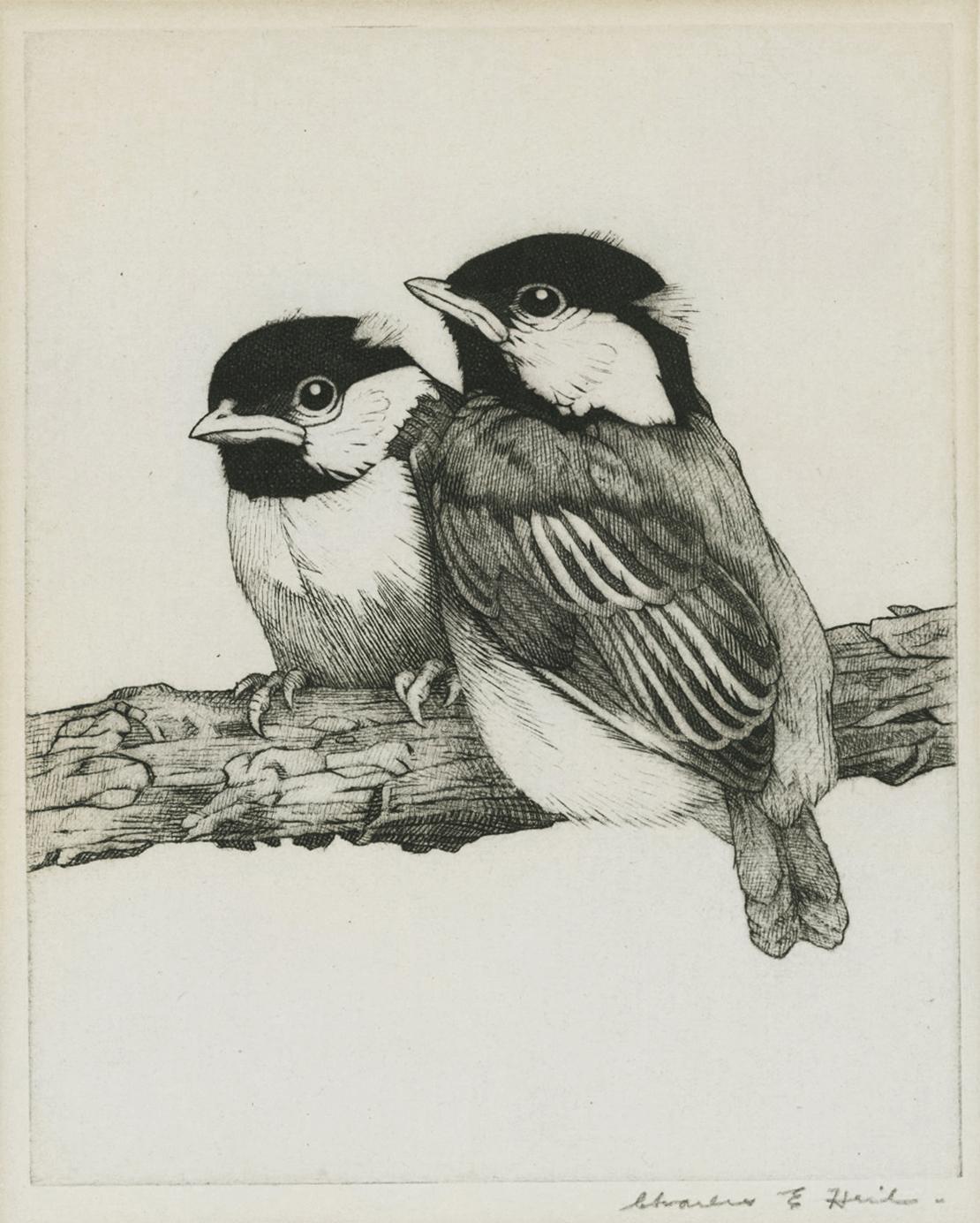 Young Chickadees