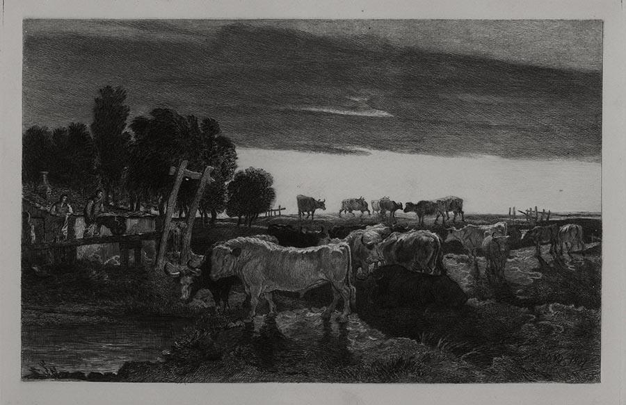 Cows at Waterhole